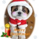 まろんからMerry Christmas!