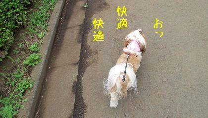 ひえひえマリンバンダナで快適なシーズー犬まろん