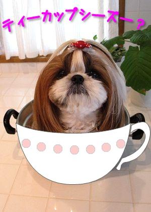 ティーカップシーズー犬なまろん