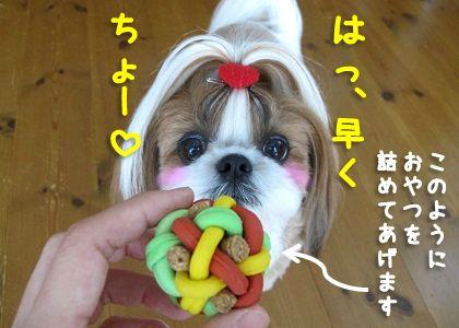 マカロニラバーボールに喜ぶシーズー犬まろん