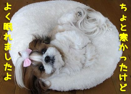 シーズー犬まろんもよく眠れた