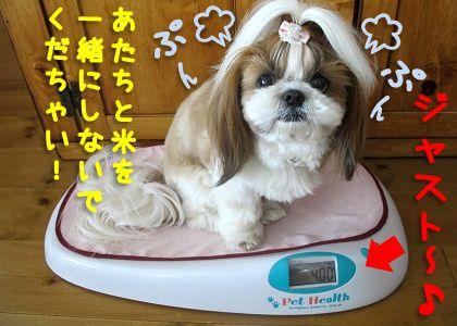 米袋と同じ4kgのシーズー犬まろん