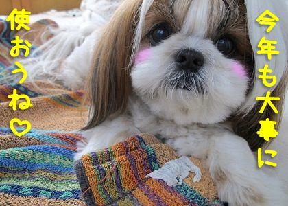 子犬の頃から愛用しているタオルケットとシーズー犬まろん