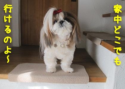 我が家の階段とシーズー犬まろん