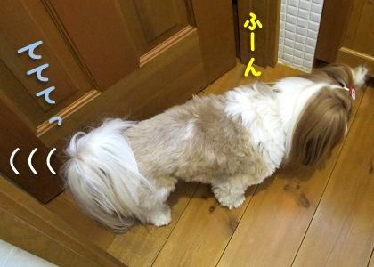 トイレに侵入するシーズー犬まろん