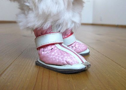 ノーマルの犬靴の履き方