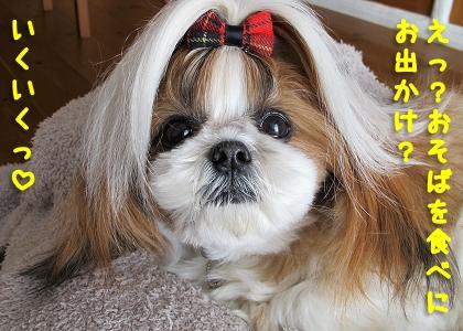 お蕎麦もお出かけも大好きなシーズー犬まろん