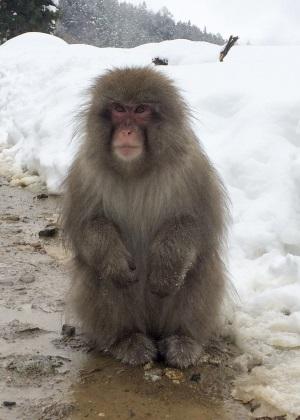 本物の猿座り