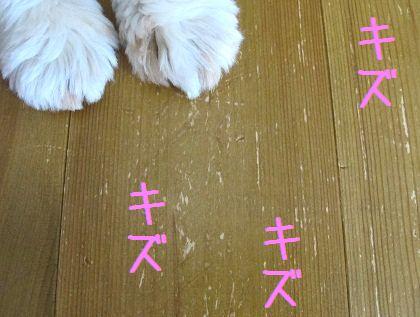 シーズー犬まろんと傷だらけの床拡大図