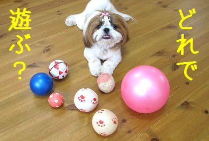 シーズー犬まろんのボールコレクション