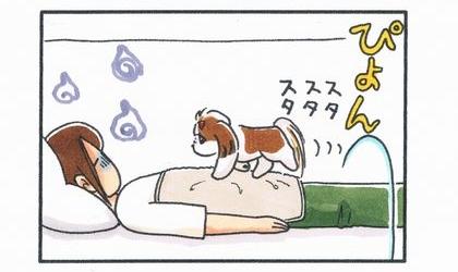 犬がお腹に毛布を掛けた飼い主の上に乗り歩く