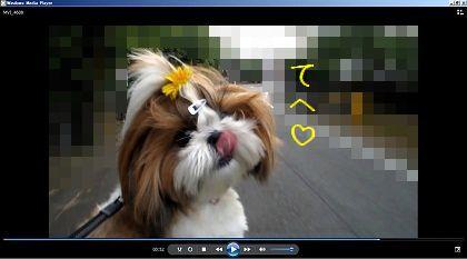 動画の静画のシーズー犬まろん