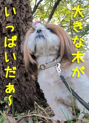 大木とシーズー犬まろん