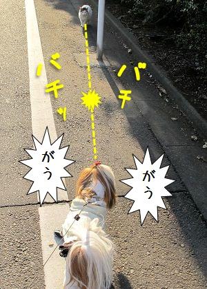 シーズー犬まろん vs 猫