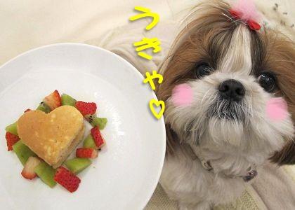 簡単ケーキとシーズー犬まろん