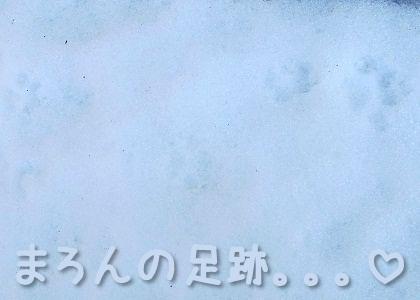 シーズー犬まろんの雪の足跡