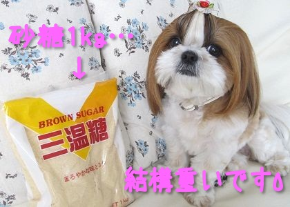 1kgの砂糖とシーズー犬まろん