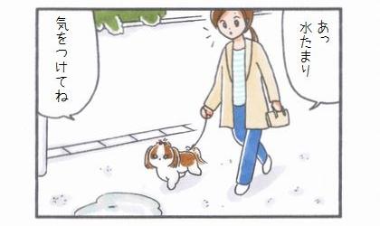 雨上がりのお散歩-2
