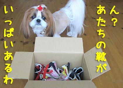 シーズー犬まろんの古い靴いっぱい