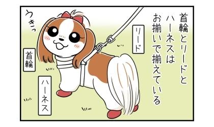犬の首輪とリードとハーネスはお揃いで揃えている。それらをつけて散歩する犬
