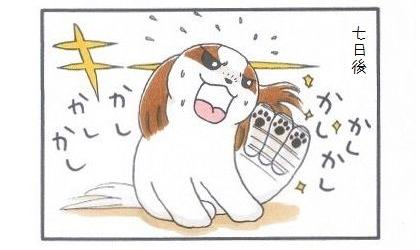 外耳炎のお話☆カウントアップ-4