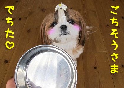 食器洗浄機なシーズー犬まろん