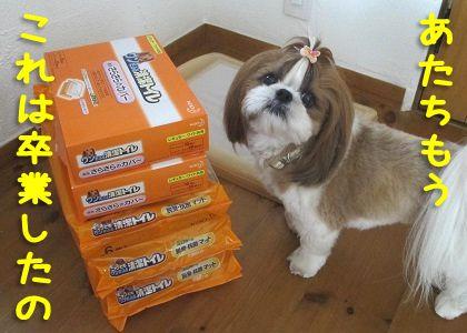 シーズー犬まろんのトイレ卒業宣言