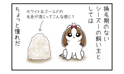換毛期のないシーズーの飼い主としては、大量の犬の抜け毛はちょっと憧れだ。ホワイト&ゴールドの毛色が混じってこんな感じ?