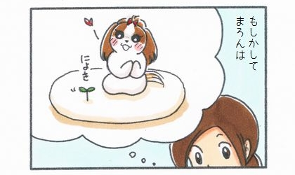 もしかして。犬の寝床であるビーズクッションからトマトの芽が出る