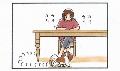 犬がダイニングテーブルの前に回り込む