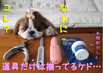 シーズー犬まろんと爪切り一式
