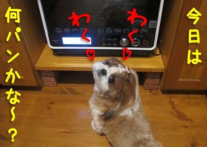 手作りパンにわくわくするシーズー犬まろん