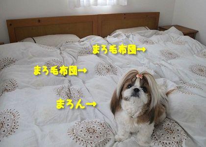 シーズー犬まろんでまろ毛布団