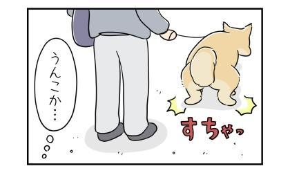 前を歩いていた柴犬がうんこをするために立ち止まった