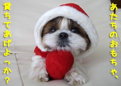 サンタのシーズー犬まろん