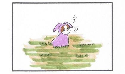 野山にピンクうさぎ-3