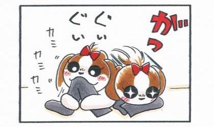 犬が靴下を咥えて噛む。カミカミ