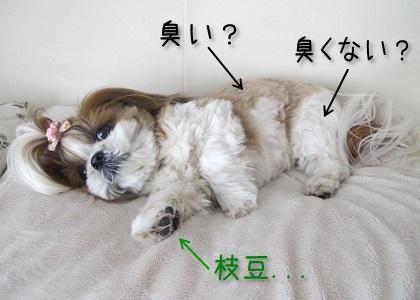 シーズー犬まろんの臭い分布図