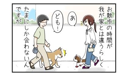 ご近所の柴犬とはお散歩の時間が違うらしく、たまにしか会わないんですが