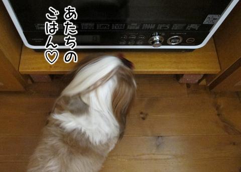 電子レンジを覗き込むシーズー犬まろん
