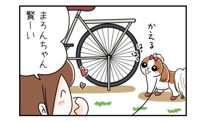 うちの自転車の前で立ち止まり、帰ると言う犬、賢い