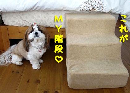 シーズー犬まろんと犬用階段(ステップ)