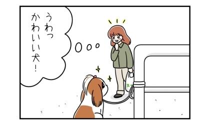 うわっ、かわいい犬!通りすがりの人がうちの犬を見初める