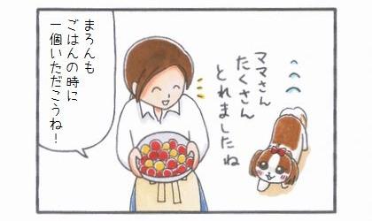 プチトマトLove -ママのトマト編--2
