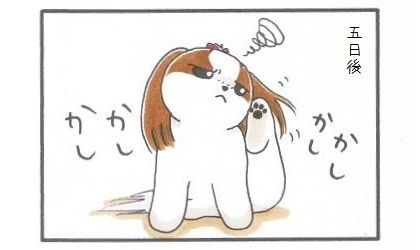 外耳炎のお話☆カウントアップ-3