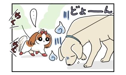 お散歩中にすれ違う犬がどよーんとしているのに気づく。遠くでは犬の鳴き声がする