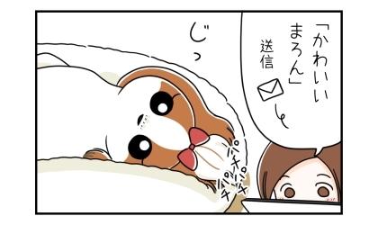 こっちをじっと見つめる犬。「かわいい犬」画像をメール送信