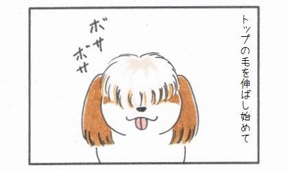 犬がトップの毛を伸ばし始めて。ボサボサ