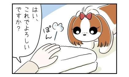 毛布をきれいにたたみ直した飼い主。はい、これでよろしいですか?