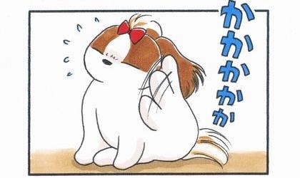 犬が後ろ足で必死に耳を掻いている